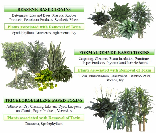 Oxygen for Oxygen plants for home