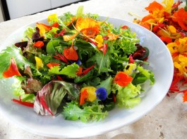 mini-chef-flower-petal-salad2