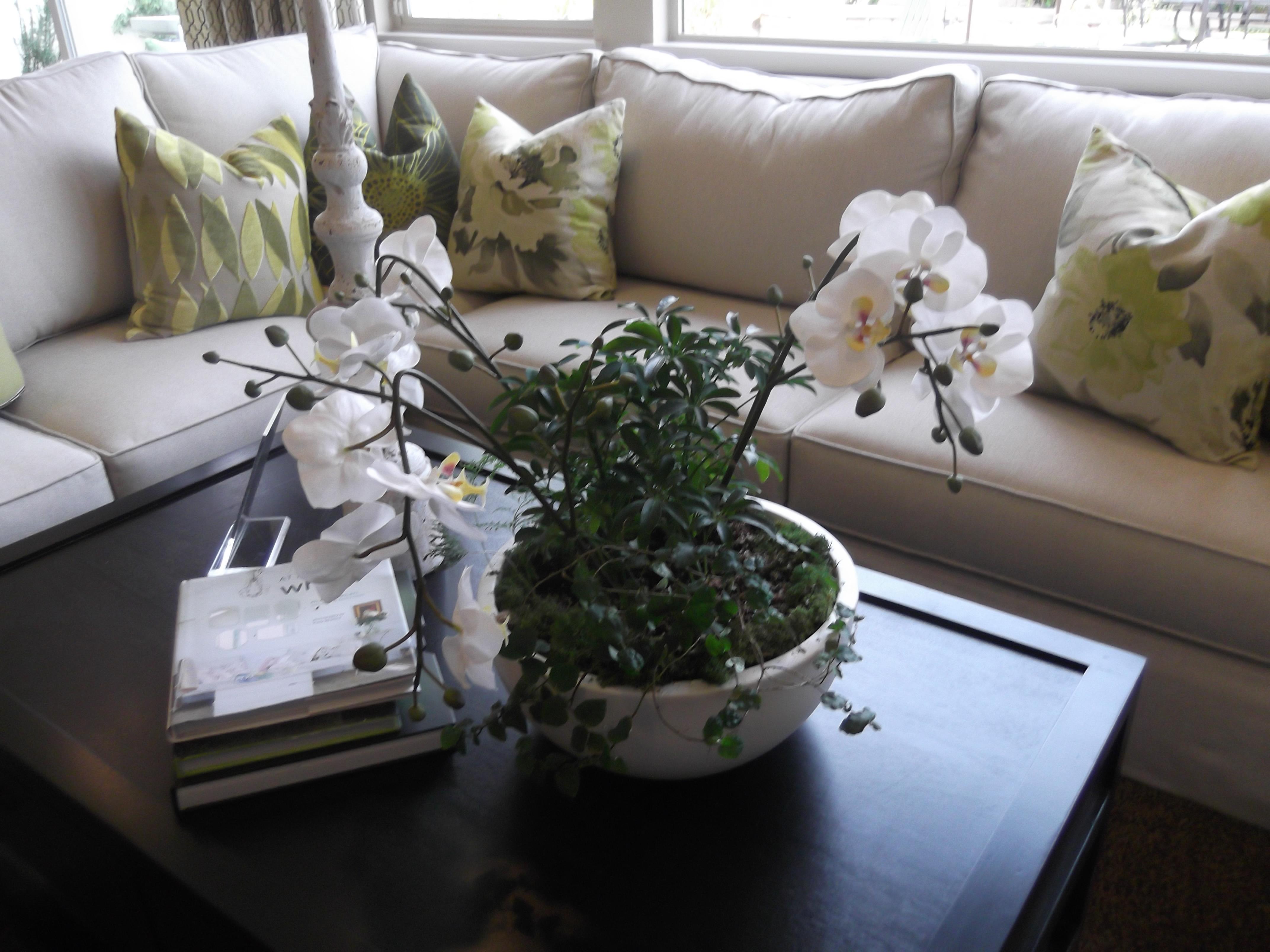 Dscf Jasmine Plants Indoors